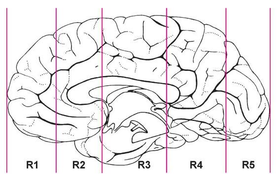 The Human Brain Atlas Of The Human Brain Sections Virtual