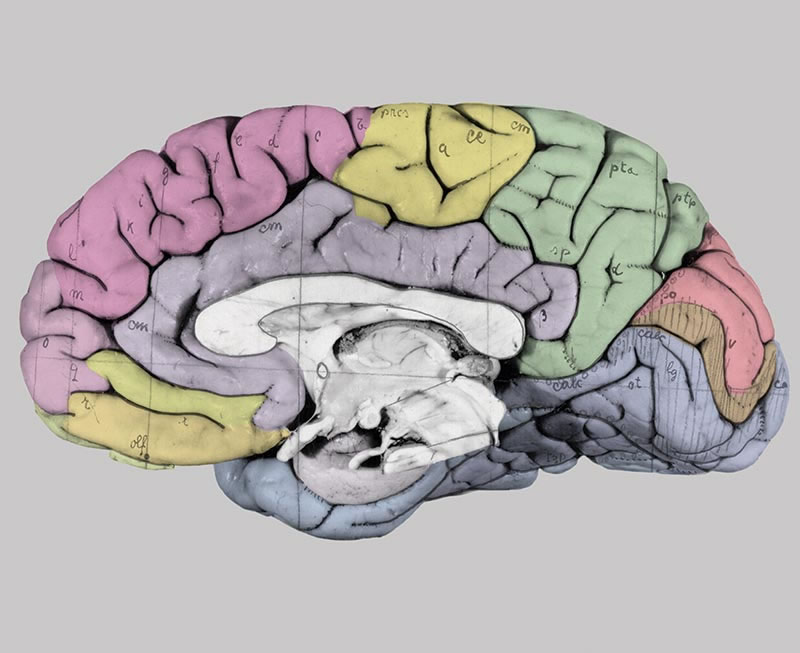 The Human Brain · Atlas of the Human Brain · Surface views