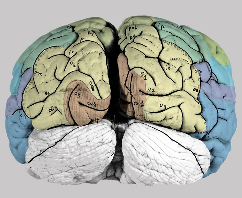 The Human Brain · Atlas of the Human Brain · Surface views