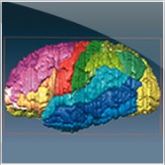 3D Views of the Human Brain
