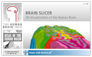 Screenshot from the Inderactive Application: This platform allows you to interactively navigate within the 3D atlas brain in real time,
